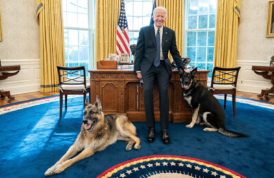 Champ and Major visit President Biden in the Oval Office