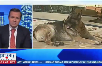 "Newsmax anchor Greg Kelly calls First Dog Champ ""rough"" and ""junkyard"""